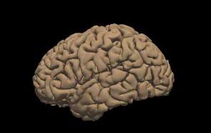 Braindevelopment